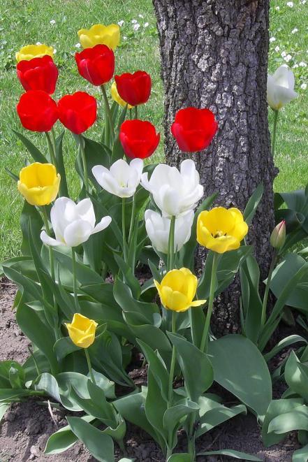 mtl-spring-flowers-4
