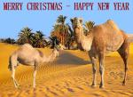 CHRISTMAS.CAMELS