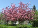 SPRING tree (1)