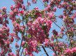 SPRING tree (11)