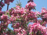 SPRING tree (2)