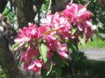 SPRING tree (4)