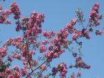 SPRING tree (5)