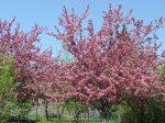 SPRING tree (6)