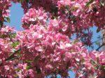 SPRING tree (7)