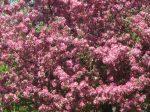 SPRING tree (8)