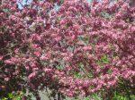 SPRING tree (9)