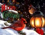 christmas (9)